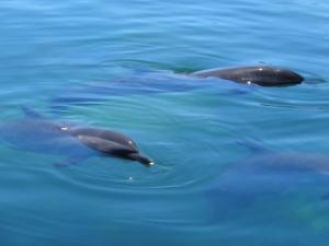 Dolphins at FengJieZhou islet