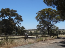 Canberra Countryside